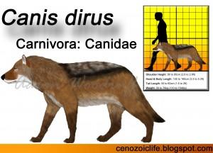 Canis dirus (8)