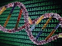 Es frecuente hablar del ADN como si de un código o lenguaje de programación se tratase.