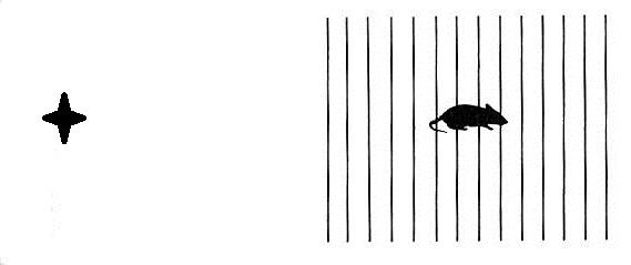 Qué tienen en común el ojo y un espejo retrovisor? El punto ciego ...