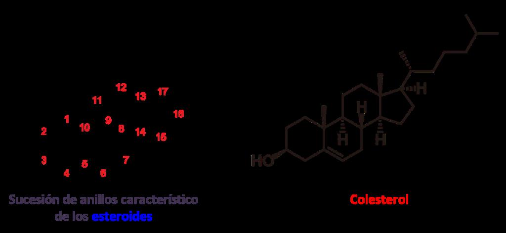 ciclos de esteroides resultados