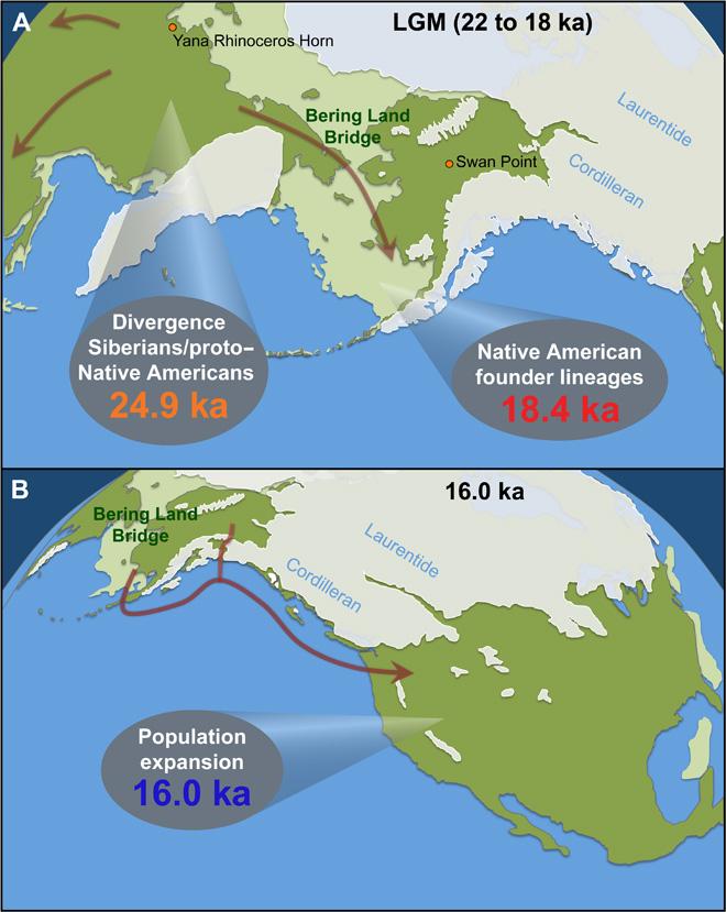 (A) En verde claro se muestra la tierra firme cuando los niveles del mar eran más bajos. En verde oscuro, la tierra emergida en la actualidad. Durante el Último Máximo Glacial, las capas de hielo bloqueaban el acceso a América desde Beringia y las poblaciones no pudieron traspasar el cinturón de hielo de las Aleutianas. Los yacimientos Yana Rinoceros Horn (hace 32 ka) y Swan Point (hace 14 ka) ilustran las diferencias temporales y geográficas en el registro arqueológico. (B) Las capas de hielo comenzaron a retirarse hace cerca de 17 ka, y la ruta costera quedó practicable hace cerca de 15 ka. El rápido crecimiento demográfico hace cerca de 16 ka probablemente marca las migraciones hacia el sur.