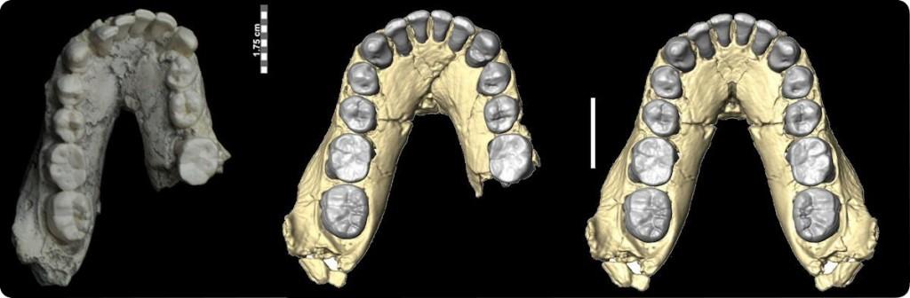 Mandíbula inferior OH 7 (izquierda original, centro escaneado en 3D, derecha reconstrucción completa)