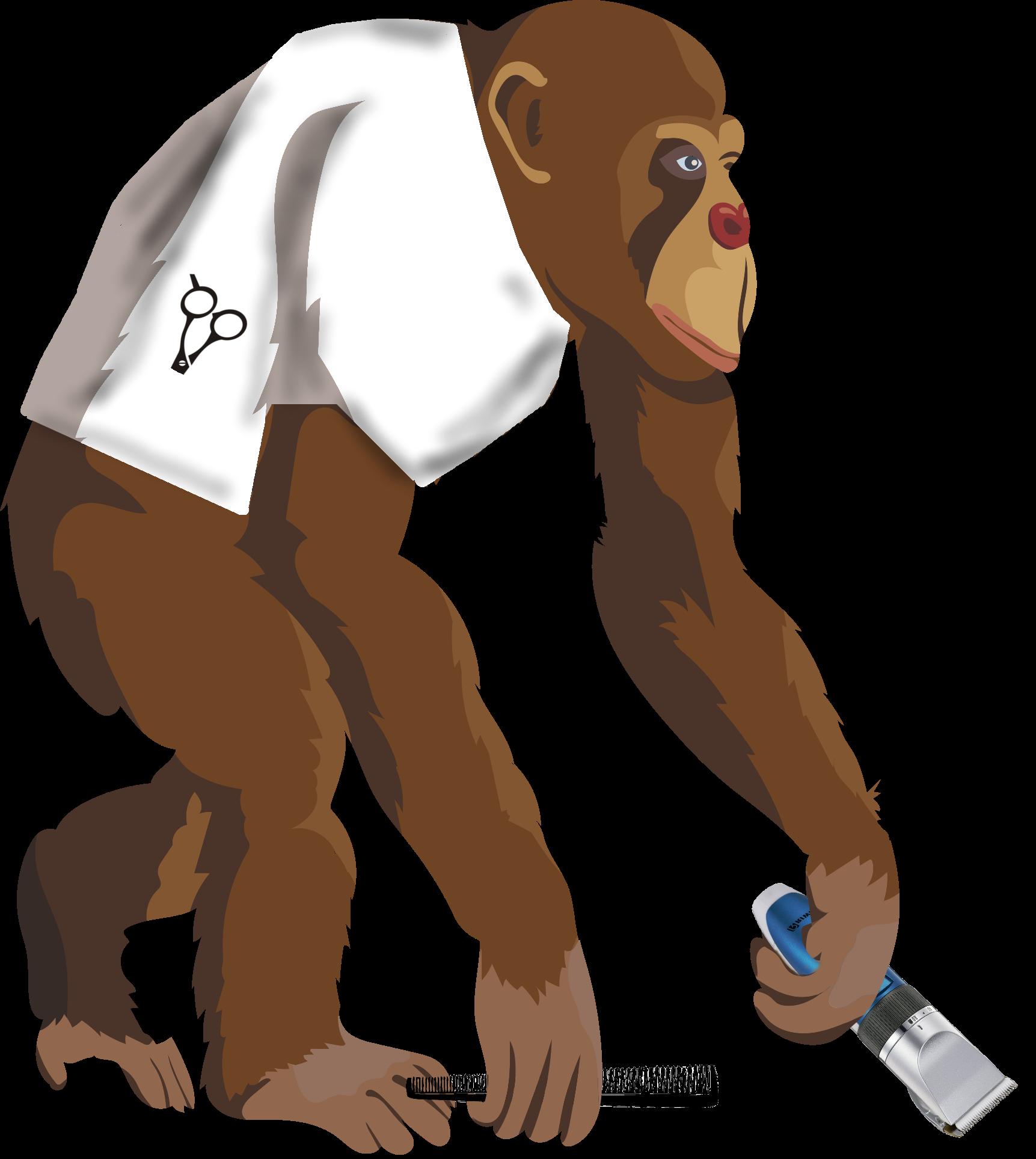 Monos Sudorosos 4 5 Carnívoros Lampiños Hablando De Ciencia